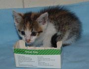 Die kleine JOLA sagt ganz lieben Dank an ihre lieben ♥ Impfpaten Tierarztfamilie Schmidt in Cammer ♥