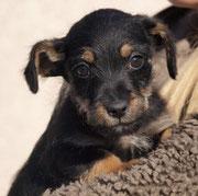 06.11.2014 - BERTI sagt DANKE - ♥ ImpfPatenFellchen von Gaby/cindy ♥ Wir wünschen dir alles Liebe im neuen Leben, kleiner Berti ♥