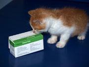 Der kleine LUKAS sagt ganz lieben Dank an seine liebe ♥ Impfpatin Silke / Chicolino ♥