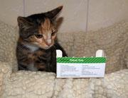 Die kleine BONIA sagt ganz lieben Dank an ihre liebe ♥ Impfpatin Christa Schmitz ♥
