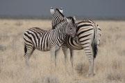 Zebramutter mit Kind