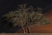 Lonesome Tree - Duene 45