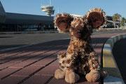 Ankunft Flughafen - Hosea Kutako International