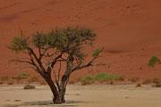 Baum im Sossusvlei