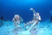 地球の海フォトコンテスト2011  ネイチャー部門 入選 「彼女を巡り」 広瀬 晴夫 ニコンF4 16mmフィッシュアイ   水深12m  撮影地:竹富島