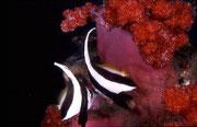地球の海フォトコンテスト2007  自由部門 入選 「チュー」 広瀬 晴夫  ニコノスⅤ UW15mm   f8 1/60 YS-50 RVP 水深20m  撮影地:伊豆大瀬崎