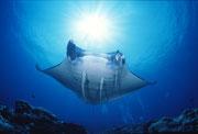 第4回 地球の海フォトコンテスト2002  自由部門 入選 「飛翔」 広瀬 晴夫 ニコンF4 16mmフィッシュアイ   ネクサスF4PRO  f11 1/60 YS-50×2 RVP 水深12m  撮影地:石垣島石崎