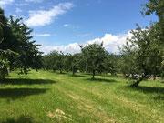Anlage mit verschiedenen Fruchtbäumen