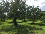 Junge und alte Bäume bringen einen Ertrag ein.