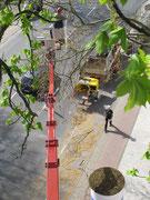 Baumpflege mittels Hubsteigertechnik