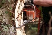 Die Motorsäge ist das Werkzeug Nr. 1 bei der Baumfällung