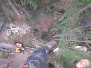 Riggingtechnik bei der Baumfällung