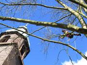 Denkmalbaumpflege Anspruch und Verantwortung