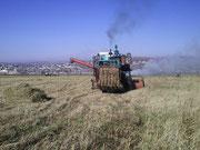 Уборка урожая на учебном поле филиала, 2013 год, осень