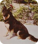 LUDO  né  1975  .....à  9  mois