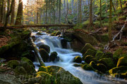 NP Bayerischer Wald, Deutschland
