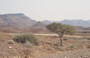 Von Palmwag ging es dann weiter in südöstlicher Richtung durch das hügelige, trockene Damaraland Richtung Twyfelfontein. Obwohl das Gebiet arm an Leben zu sein scheint, stellten wir bald fest, dass es eine faszinierende Tierwelt verbarg.