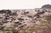 Mit Moosen und Flechten überwachsenes Gestein zwischen Flughafen Keflavik und Reykjavik