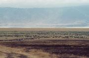 Etwa 600 m unterhalb des Kraterrandes liegt die 269 km2 grosse Kraterpfanne. Der Park ist eine UNESCO World Heritage Site. In dieser Kraterpfanne leben etwa 25'000 Grosstiere. Weil Teile der Vegetation abgebrannt sind, wächst neues. zartes. grünes Gras.