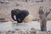 """Bei der Wasserstelle """"Olifantsbad"""" - nomen est Omen - haben wir tatsächlich eine kleine Elefantenherde beobachten können, welche, nachdem sie den Durst gelöscht hatte, die Gelegenheit nutzte, um wirklich im Wasser herumzuplantschen (vor allem die Jungen)."""
