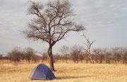 Unser Zelt im Camp des Serengeti NP. In einer Nacht hörten wir Löwengebrüll aus ca. 100 m, dann aus ca. 50 m und dann so nahe, dass die Luftvibrationen im Zelt spürbar waren. Zuletzt ist ein Löwenpaar durchs Camp spaziert, um am Wasserhahn zu trinken.