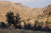 Zum Namib-Naukluft Nationalpark gehören auch die Naukluftberge. Hier regnet es mit durchschnittlich 195 mm/Jahr (maximal 500 mm/Jahr) wesentlich mehr als in der Wüste, wodurch selbst in der Trockenzeit eine üppige Vegetation bewahrt wird.