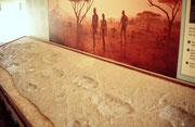 17 Jahre nach Beginn der Ausgrabungen entdeckte Mary Leakey 3 Millionen Jahre alte eindeutige versteinerte Fusspuren von Frühmenschen (Hominiden). Es sind die Spuren von zwei grösseren, zwei etwas kleineren und wirklich kleinen Füssen (Eltern mit Kind ?).