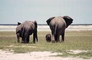 Nach dem erfrischenden Besuch an der Wasserstelle zog die Herde weiter in den Nationalpark hinein. Auch die winzigen Kälber zottelten, im Schutz ihrer riesigen Mütter und Tanten, wieder von dannen.