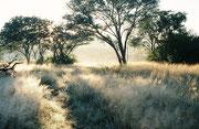 In der Frühe des Morgens wanderten wir in ein Beobachtungsversteck in die Nähe des Vleis im Quellgebiet des Hex Rivers. Wir hofften auf ergiebige Vogelbeobachtungen (immerhin soll es im Kgaswane Mountain Reservat etwa 320 Vogelarten geben).