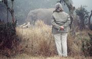 In der Nacht kamen zwar keine Elefanten ins Camp. Dass die Sache jedoch kein Märchen war, sahen wir am anderen Tag, als sich dieser riesige Bursche im kühlen Morgennebel unmittelbar neben dem Camp verpflegte. (Ngorongoro NP)