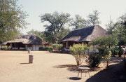 Unser zweiter Aufenthaltsort im Krüger NP war das Camp Shingwedzi. Unvergesslich bleibt der Besuch einer Gruppe Paviane (Papio ursinus) bei unseren Nachbarn, die deren unbewachte Nahrungsvorräte auf der Terrasse ihres Häuschens plünderten.