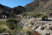 Je höher wir anstiegen, desto mehr Pflanzen gab es nun, insbesondere dort, wo ein Bergbach floss.