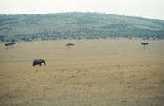 Noch ein letzter Blick auf den fantastischen Masai Mara NP Oh ja, es gab dort auch Elefanten...