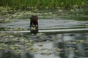 Neugierig steckte der Riesenotter seinen Kopf aus dem Wasser um besser sehen zu können, wer ihn da besuchte.