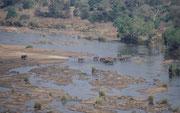 """Von der hoch über dem gleichnamigen Fluss gelegenen Aussichtsplattform des Camps """"Olifants"""" bot sich uns dieses einmalige Bild: Den Fluss überquerte gerade eine ca. 30-köpfigen Elefantenherde. Vorne gingen die Kühe und die Kälber, hinten ein Bulle."""