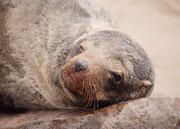 Es ist Besuchern des Reservats verboten, das kleine Steinmäuerchen am Strassenrand zu übersteigen und den sandigen Strand zu betreten. Dadurch zeigen die Tiere kein Fluchtverhalten und man kann sie aus nächster Nähe beobachten.