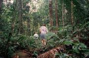 Regenwald in der Nähe von Mt. Saint Catherine