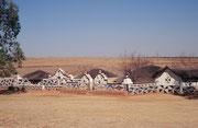 """Das letzte Reservat auf unserer Reise im Jahre 1999 war das 2300 ha grosse Botshabelo Nature Reserve in einem Tal des """"Klein Olifants River"""". Uns interessierte das Weissschwanzgnu (Connochaetes gnou), das dort vorkommt. Wir sahen es aber nur aus der Ferne"""