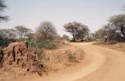 Landschaft im westlichen Teil des Parks. Links im Bild ein Termitenhügel, wie sie für viele Landschaften Afrikas typisch sind. (Lake Manyara NP)
