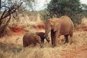 Rötliche Elefantenmutter mit Kind (Tsavo East)