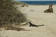 """Bei der """"Entdeckung"""" von Galapagos schrieb ein Priester, die Tiere seien so dumm, dass sie sich, ohne sich zu wehren oder zu fliehen, totschlagen liessen. Der Mann der Kirche hat nicht erkannt, dass er sich im Paradies auf Erden befand. Traurig, traurig !"""