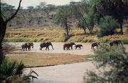 Elefanten durchqueren den Uaso Nyiro Fluss. Man beachte die kletternden Elefanten im Hügel im Hintergrund (Samburu)