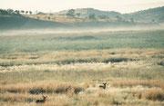 Der Ellipsenwasserbock ist zwar an Dauergewässer gebunden, in deren Nähe sich Wälder oder offenes Grasgelände mit Dickicht und Schilf bewachsene Gebiete befinden, kann sich aber auch vom Wasser entfernt in der offenen Savanne oder in Wäldern aufhalten.