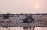 """Auch beim Camp """"Halali"""" befindet sich eine bequem einsehbare Wasserstelle, wo man am Abend einen traumhaften Sonnenuntergang erleben und gleichzeitig Tiere beobachten kann. Spannend sind auch Nachtbeobachtungen von dieser sicheren Warte aus."""