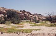 Wir fuhren durch das Tal des Swakop östlich und dann nördlich, um zur Welwitschia-Ebene zu gelangen. Zur Mittagszeit pick-nickten wir in diesem paradiesischen, trockenen Flussbett bei ungewohnter, völliger Stille - mit Ausnahme einiger zwitschernder Vögel
