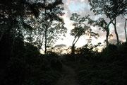 Früh am Morgen ging es noch vor Sonnenaufgang über den Fluss zum sogenannten Parrot Lick, mit dem Namen Collpa de los Guacamayos Blanquillo.