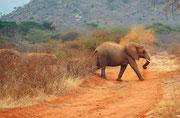 Kein Wunder, dass bei der Farbe dieser Erde auch die Elefanten bald rötlich werden (Tsavo East)