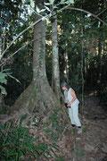 Wir besuchten auch eine weitere Lecke, wo die nachtaktiven Tapire (Tapirus terrestris) ebenfalls Mineralien aufnehmen. Nach dieser Wanderung durch den Wald warteten wir auf einer erhöhten Holzplattform stundenlang mucksmäuschenstill auf die Tiere.