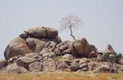 """Von Outjo aus ging es nach Westen durch eine spannende Landschaft mit ihren vielen Kopjes, kleinen Hügeln aus Steinblöcken. Wörtlich heisst Kopje """"kleiner Kopf"""". Zuoberst steht - vermutlich - ein Hirtenbaum."""