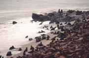 Auf diesen Bildern fehlen drei Dinge: A) das unablässige Rauschen der Meeresbrandung, B) das heisere Bellen der Robben und C) ein eindringlicher, Gestank der über der ganzen Kolonie liegt und sich tief in der Nase und – tagelang - in den Kleidern festsetz